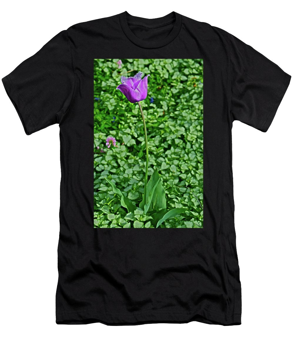 Tulip Men's T-Shirt (Athletic Fit) featuring the photograph 2016 Mid May Exotic Purple Tulip by Janis Nussbaum Senungetuk