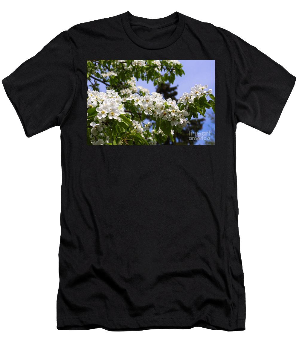 Pear Men's T-Shirt (Athletic Fit) featuring the photograph Flowering Pear Branch In The Garden by Valdis Veinbergs