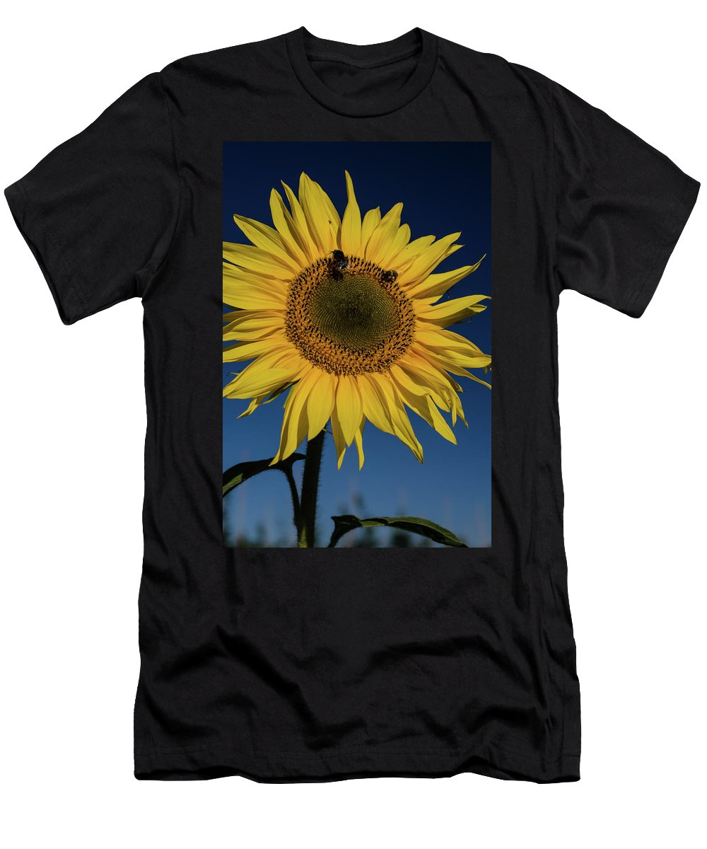 Winterpacht Men's T-Shirt (Athletic Fit) featuring the photograph Sunflower Fields by Miguel Winterpacht