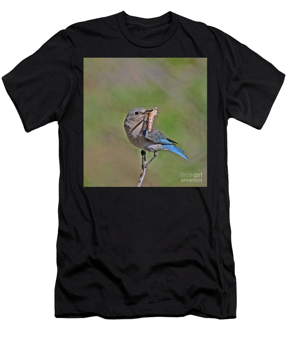 Mountain Bluebird Men's T-Shirt (Athletic Fit) featuring the photograph Mountain Bluebird by Gary Wing