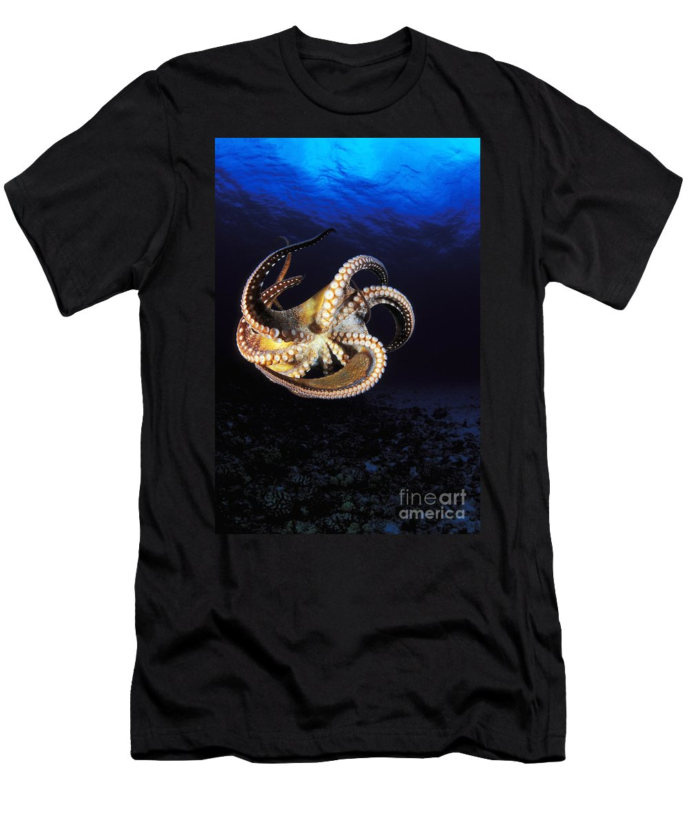 Animal Art Men's T-Shirt (Athletic Fit) featuring the photograph Hawaii, Day Octopus by Dave Fleetham - Printscapes