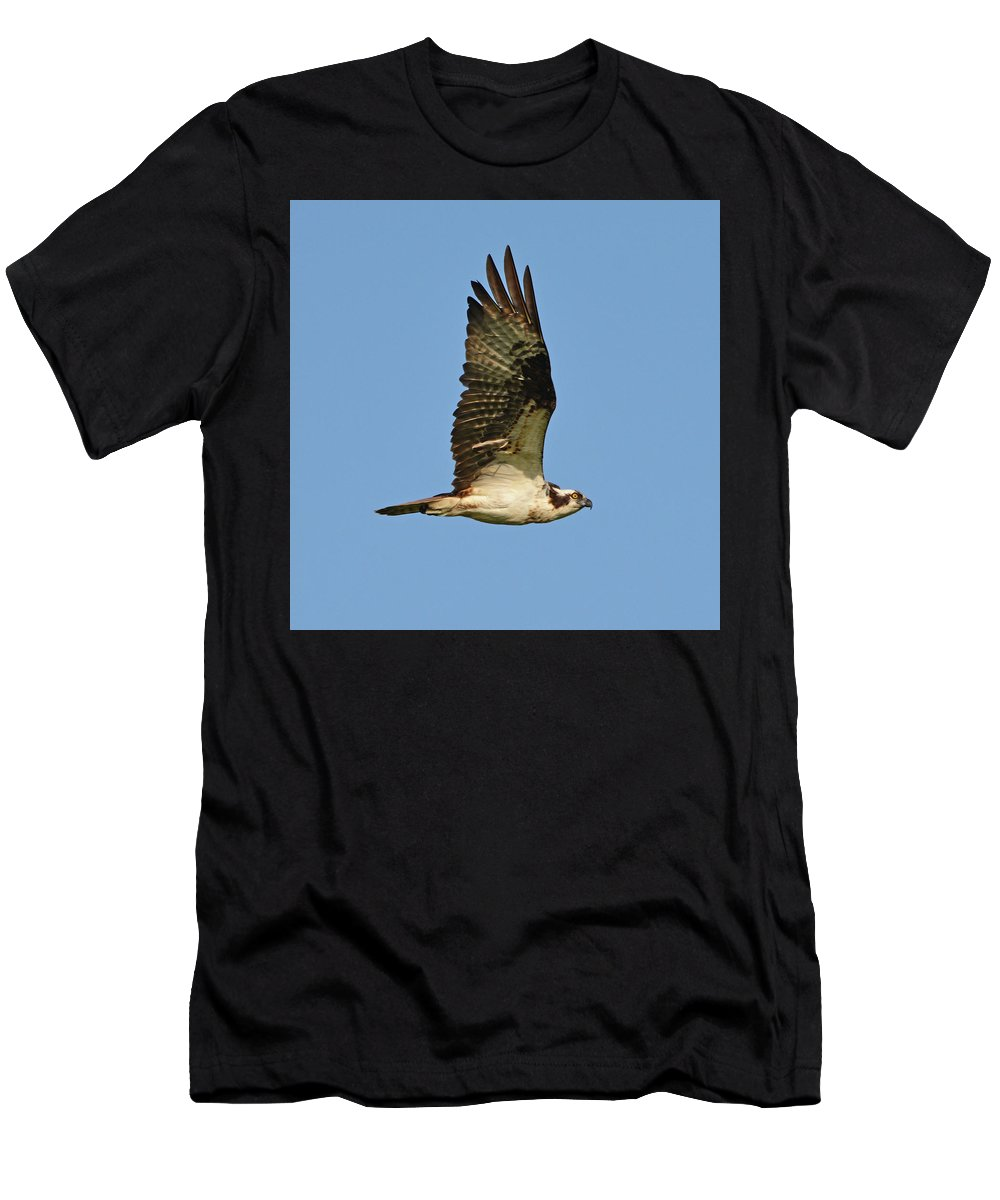 Bird Men's T-Shirt (Athletic Fit) featuring the photograph Osprey by Lindy Pollard