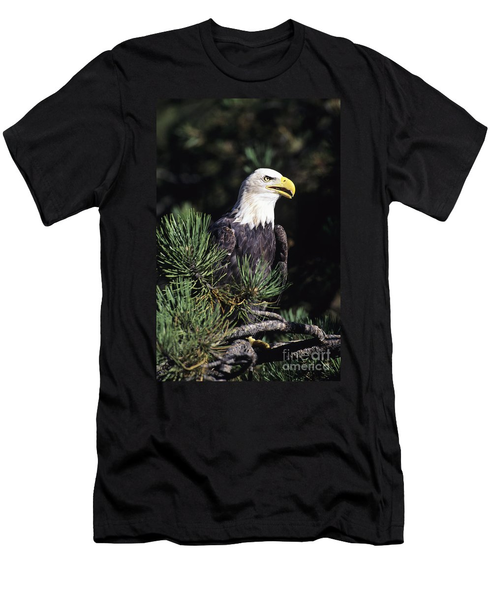 Alaska Men's T-Shirt (Athletic Fit) featuring the photograph Bald Eagle by John Hyde - Printscapes