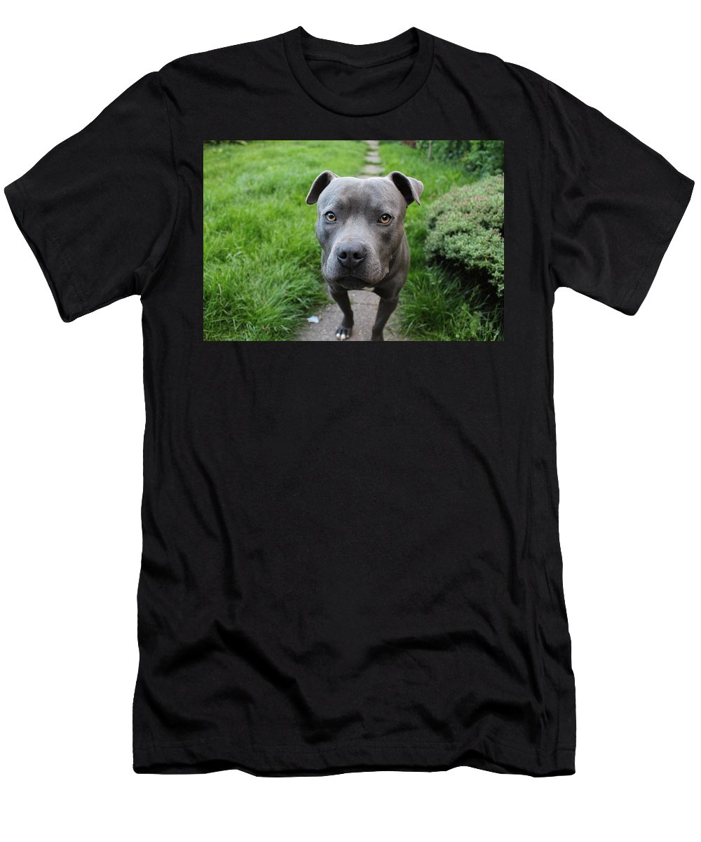 Dog Men's T-Shirt (Athletic Fit) featuring the photograph A Cute Dog Outdoors by Rikki Prince