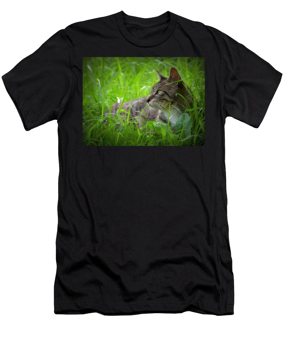 Cat Men's T-Shirt (Athletic Fit) featuring the photograph A Homeless Cat by Kana Iwao