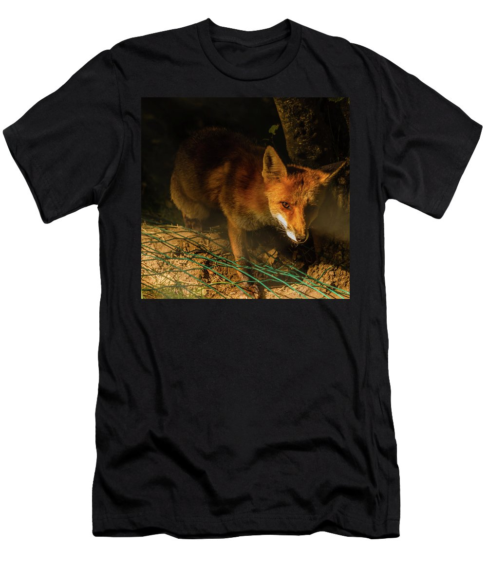 Animal Men's T-Shirt (Athletic Fit) featuring the photograph A Nocturne Meeting With A Fox In The Woodland by Susanna Mattioda