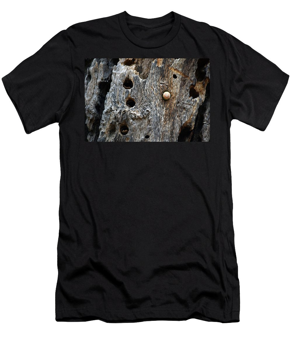 Nature Men's T-Shirt (Athletic Fit) featuring the photograph Acorn Woodpecker Cache, Sequoia National Park, Ca September 2016 by Timothy Giller