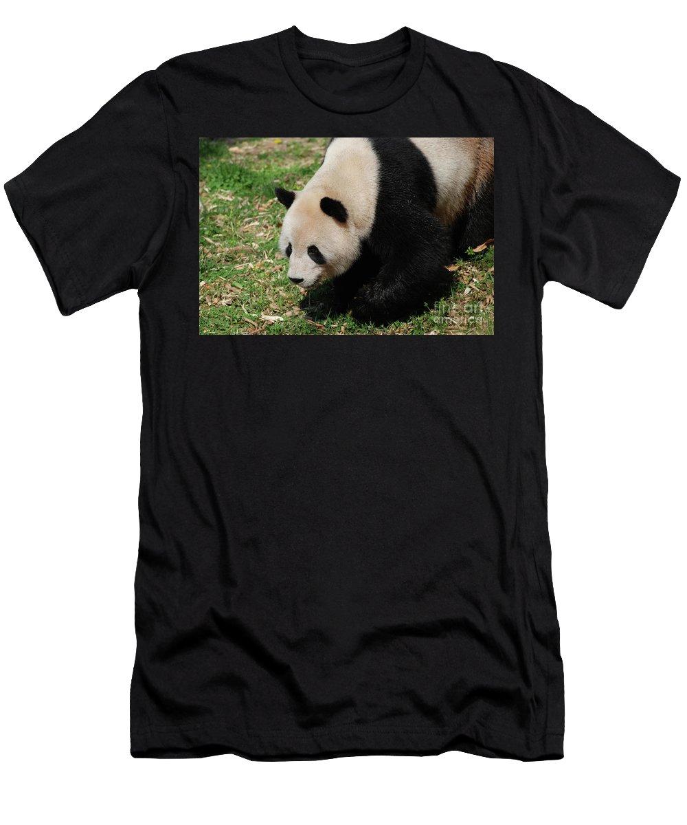 Panda Men's T-Shirt (Athletic Fit) featuring the photograph Adorable Giant Panda Bear Ambling Along by DejaVu Designs