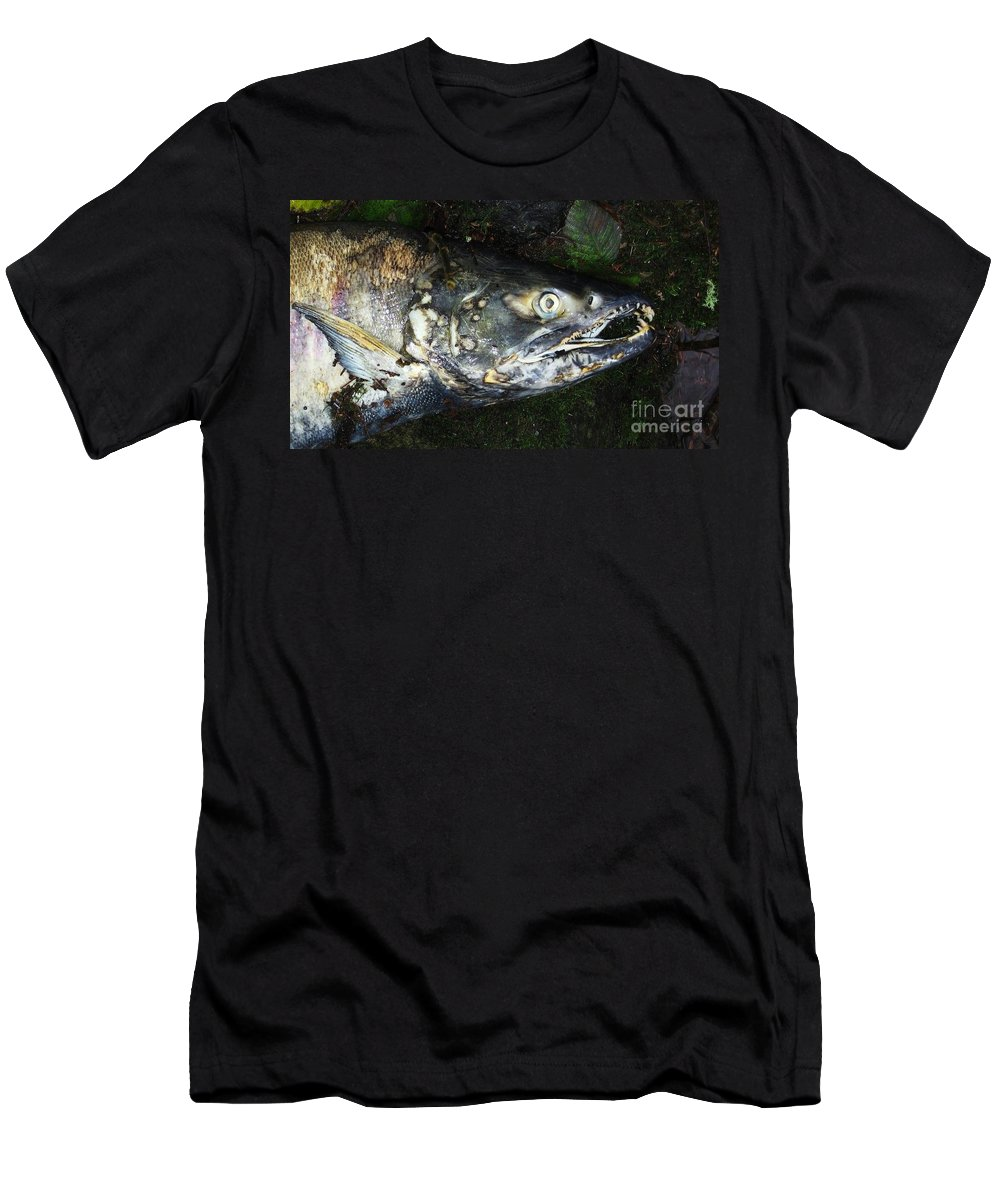 Photography Salmon Death Fish River Malahat Hatch Men's T-Shirt (Athletic Fit) featuring the photograph After Death by Seon-Jeong Kim