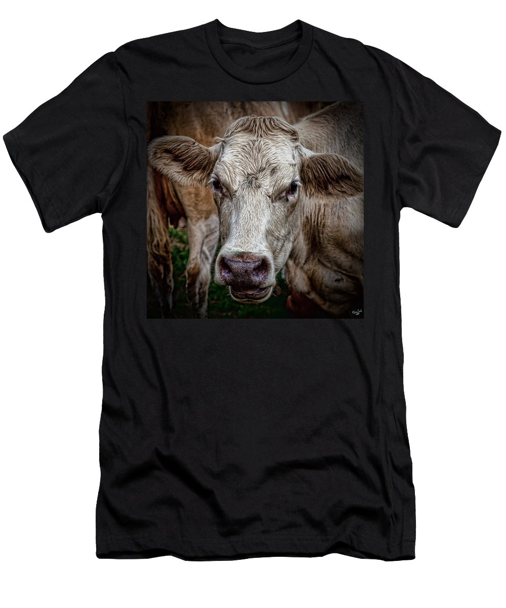 Cow Men's T-Shirt (Athletic Fit) featuring the photograph Ain't She Beautiful by Chris Lord