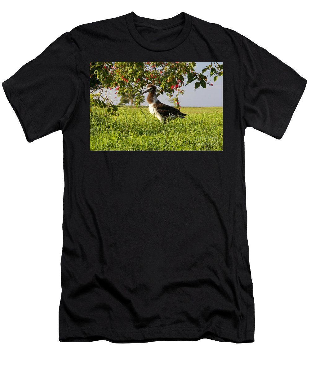 Albatross Men's T-Shirt (Athletic Fit) featuring the photograph Albatross 1 by John Franke