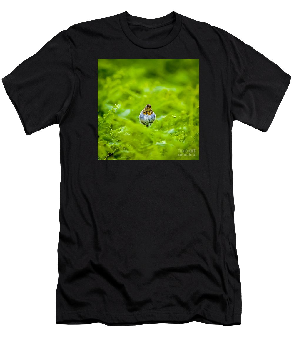 Bird Men's T-Shirt (Athletic Fit) featuring the photograph All Puffed Up by Nancy L Marshall