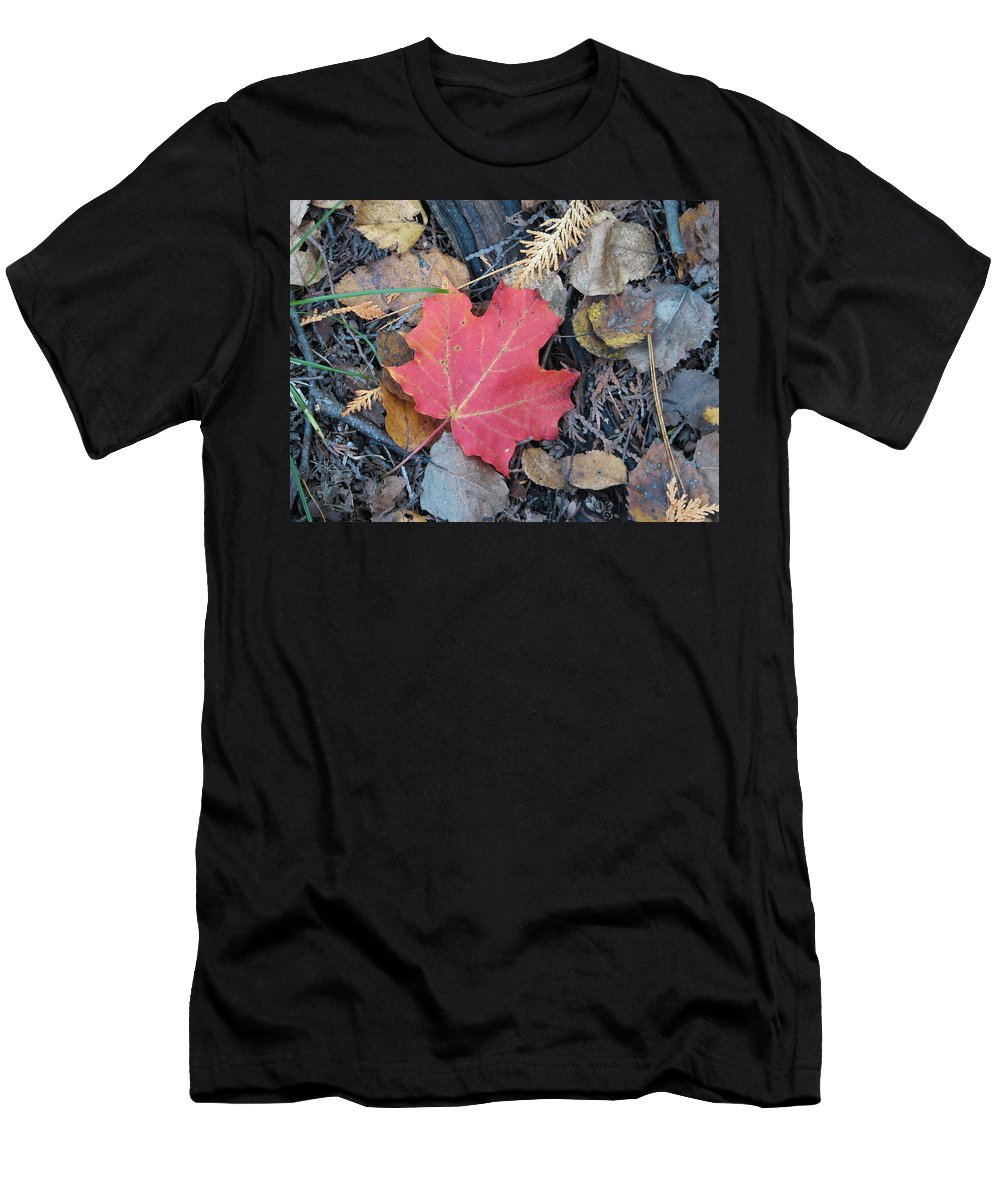 Leaves Men's T-Shirt (Athletic Fit) featuring the photograph Alone In The Woods by Kelly Mezzapelle
