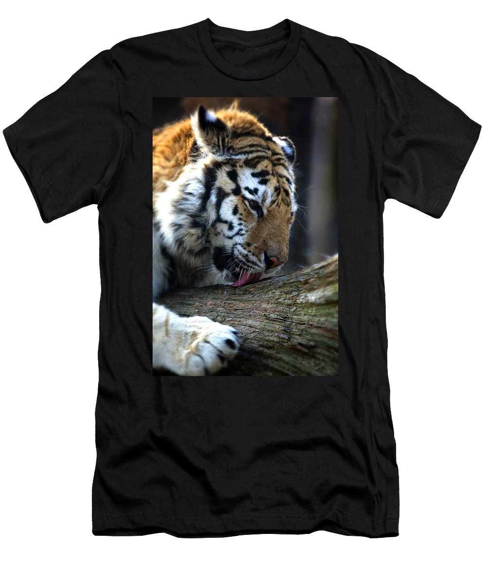 Tiger Men's T-Shirt (Athletic Fit) featuring the photograph Always A Cat by Karol Livote