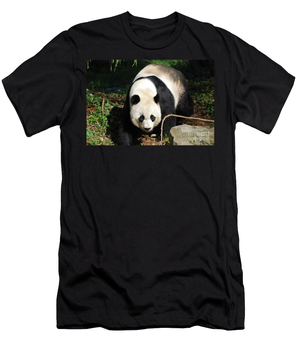 Panda Men's T-Shirt (Athletic Fit) featuring the photograph Amazing Sweet Chinese Giant Panda Bear Walking Around by DejaVu Designs