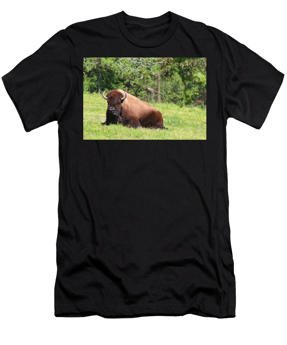 Buffalo Men's T-Shirt (Athletic Fit) featuring the photograph American Buffalo by Gordon Cain