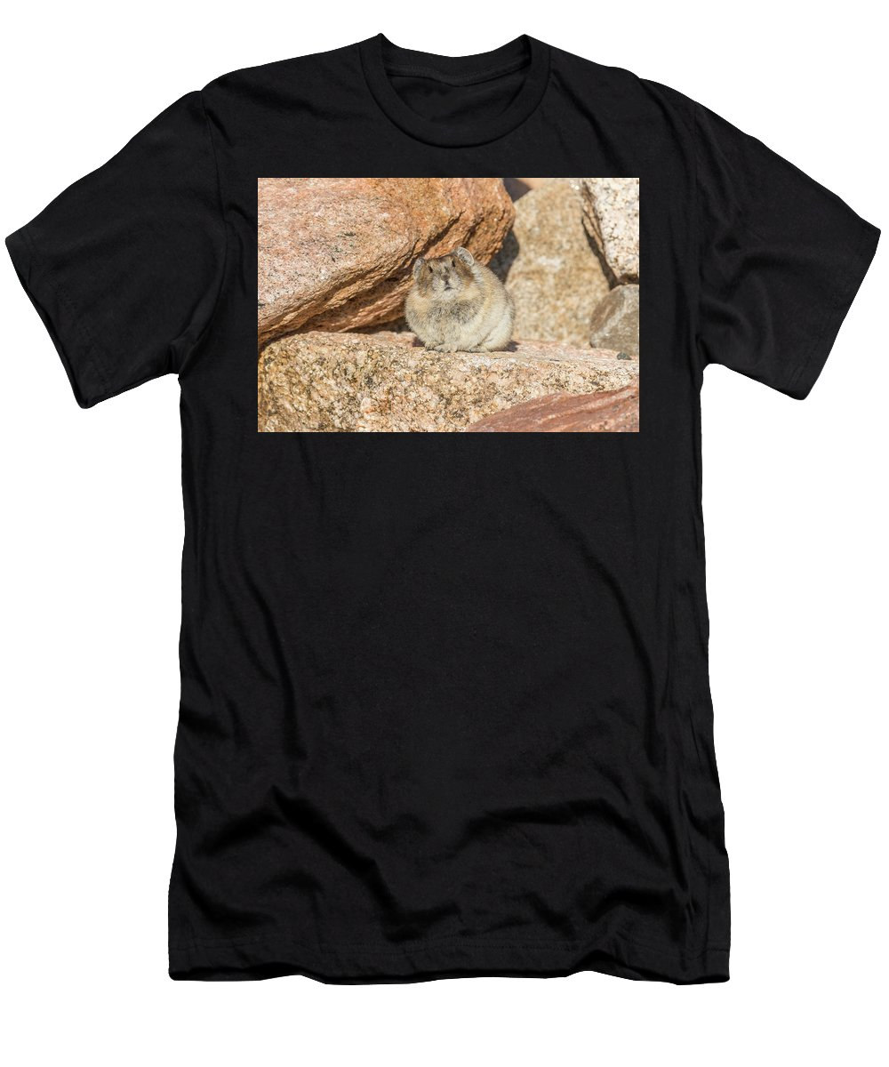 Pika Men's T-Shirt (Athletic Fit) featuring the photograph American Pika Focuses On The Camera by Tony Hake