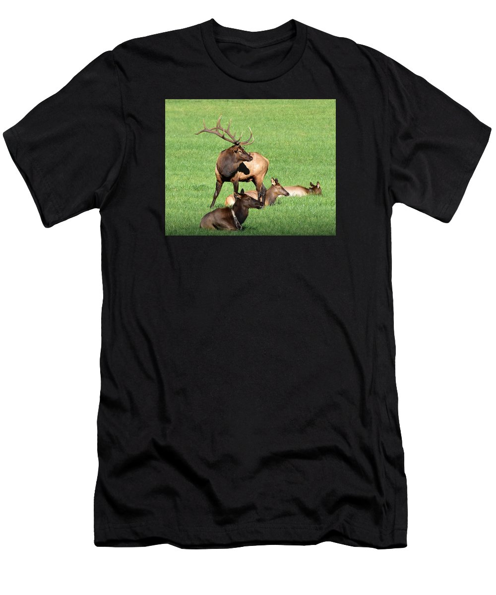 Ann Keisling Men's T-Shirt (Athletic Fit) featuring the photograph Among The Harem by Ann Keisling