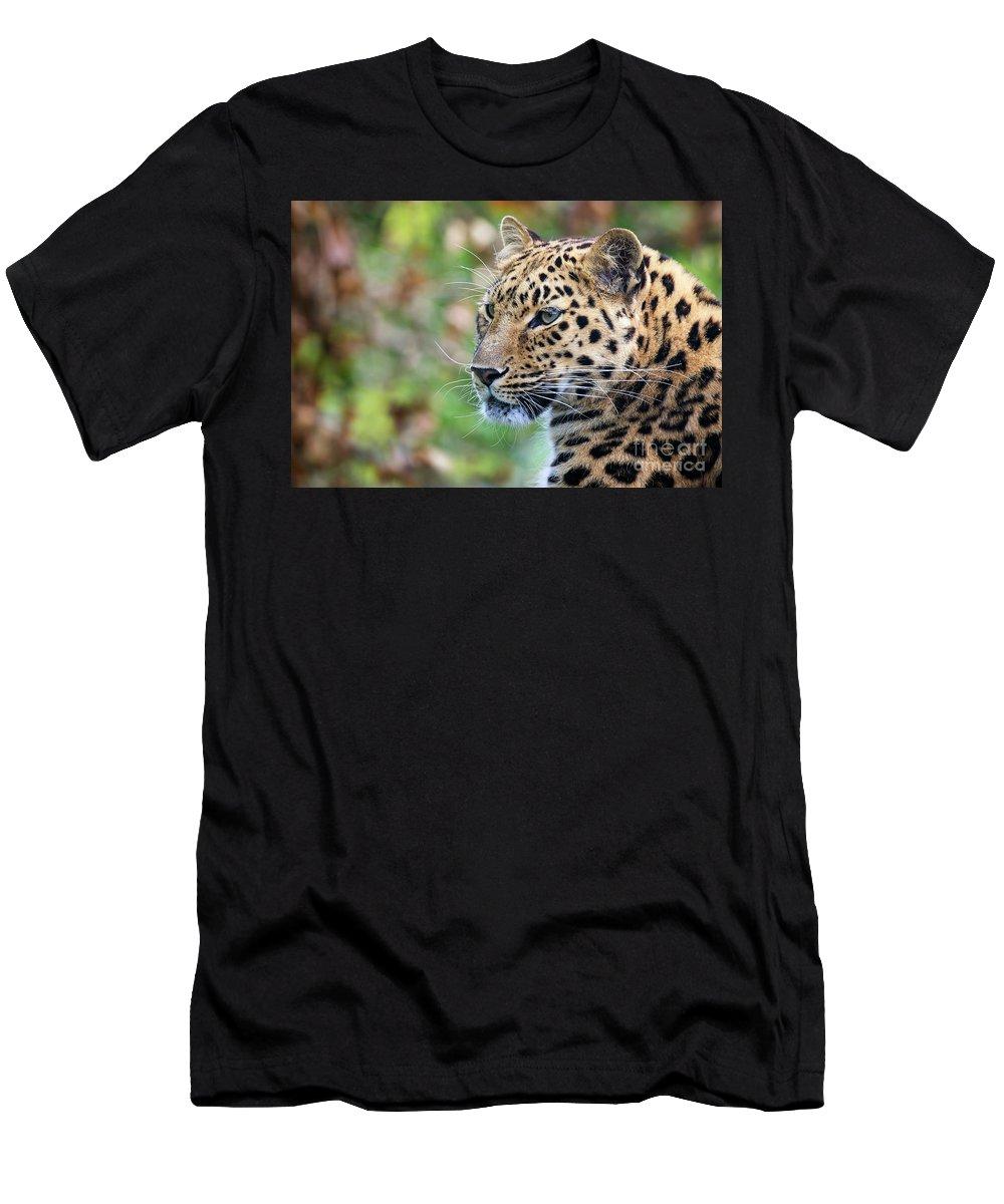 Leopard Men's T-Shirt (Athletic Fit) featuring the photograph Amur Leopard Portrait by Jane Rix