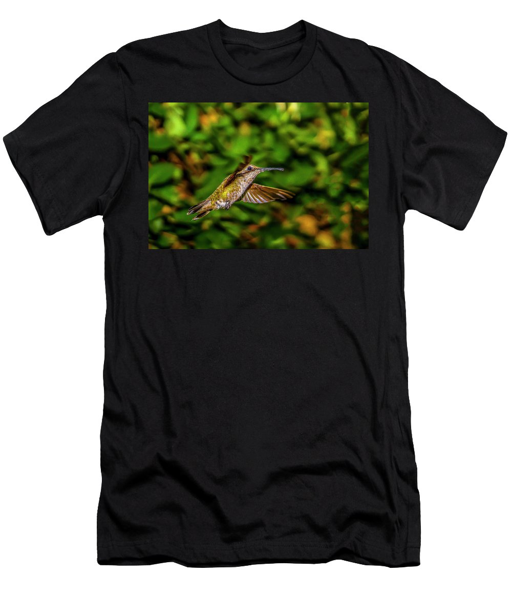 Aana Humingbirds Men's T-Shirt (Athletic Fit) featuring the photograph Anna Hummingbird In Flight 2 by Donald Pash
