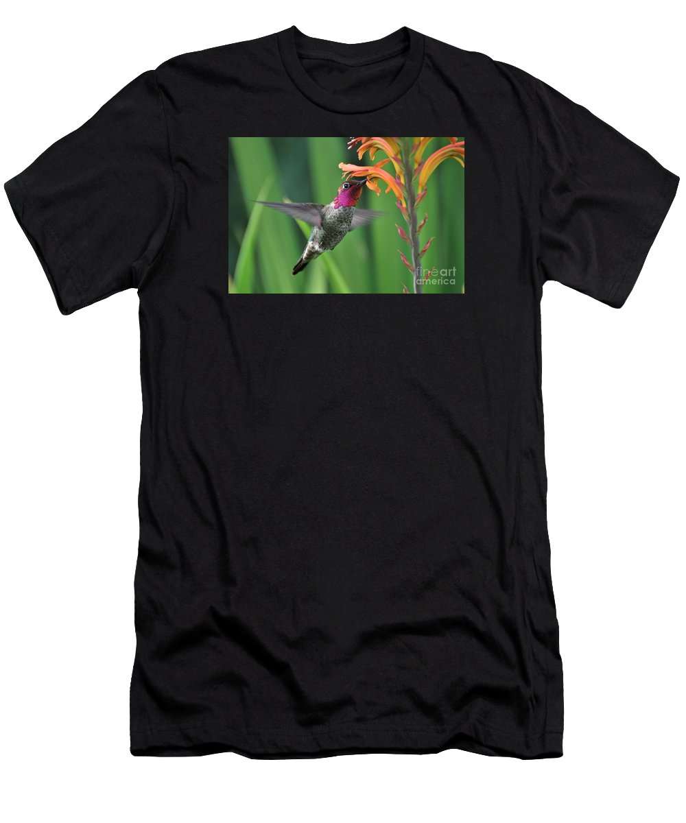 Anna's Hummingbird Men's T-Shirt (Athletic Fit) featuring the photograph Anna's Hummingbird by Marta Robin Gaughen