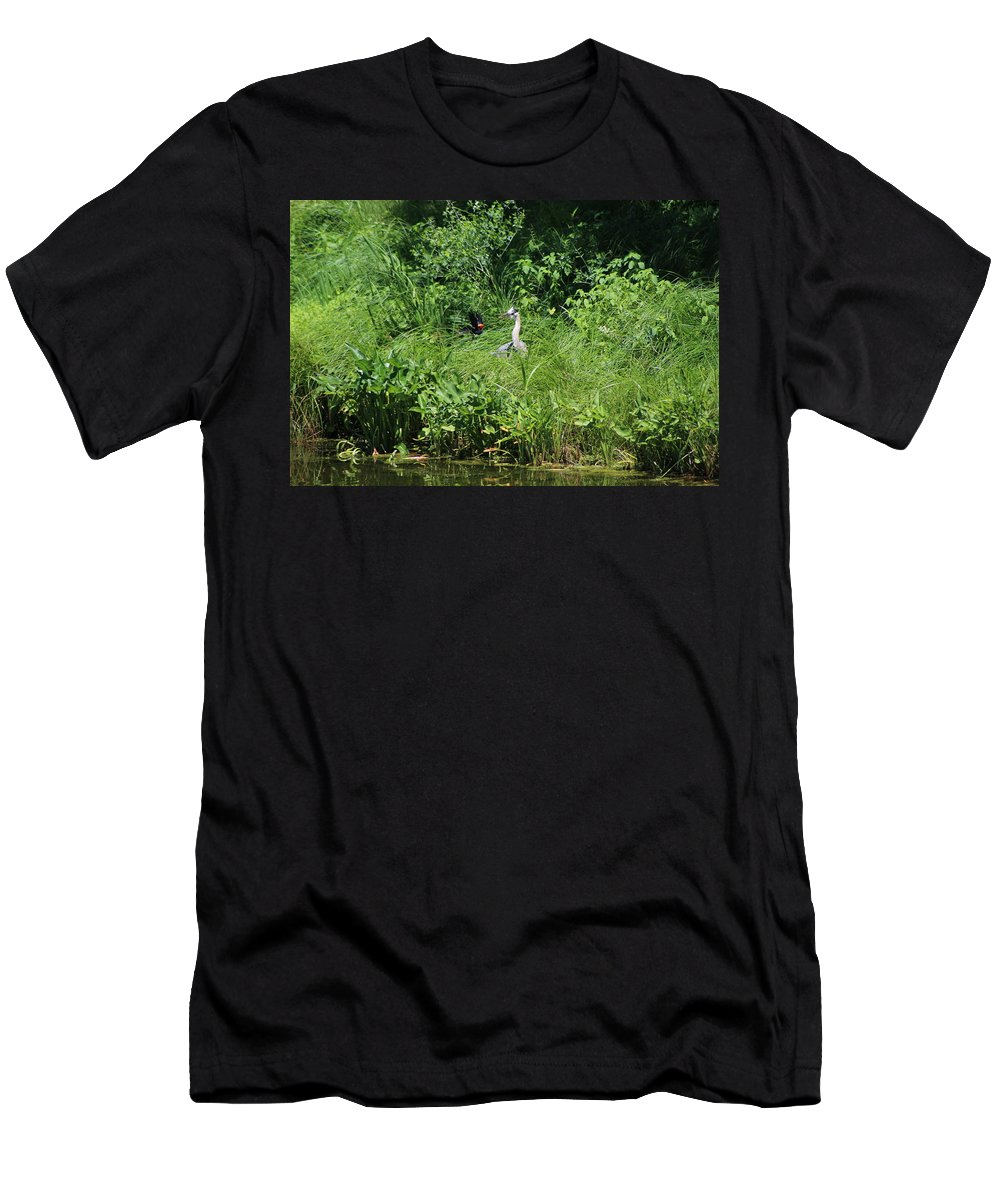 Marsh T-Shirt featuring the photograph Annoyed - Heron and Red Winged Blackbird 5 of 10 by Colleen Cornelius