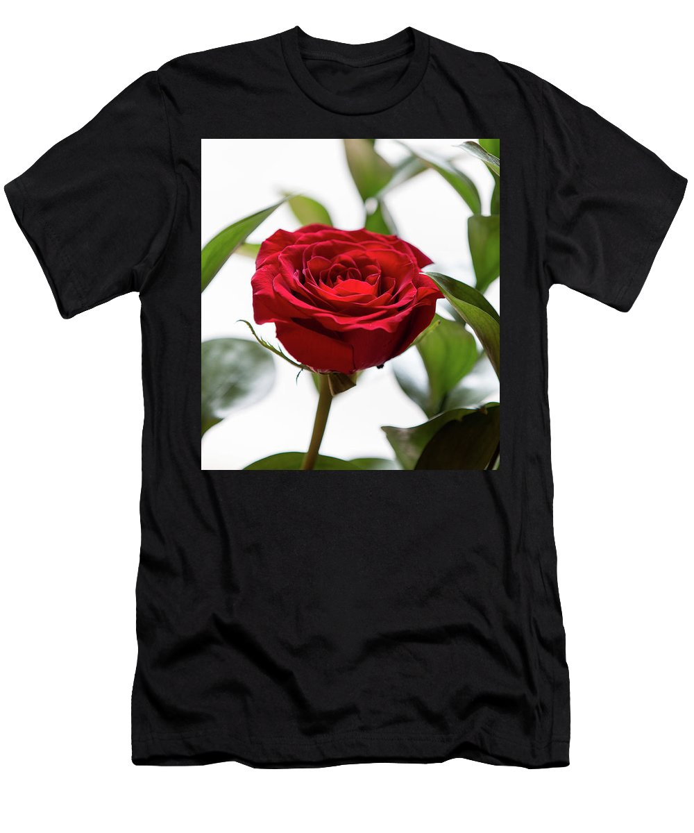 Flower Men's T-Shirt (Athletic Fit) featuring the photograph Another Rose by Ben McLachlan