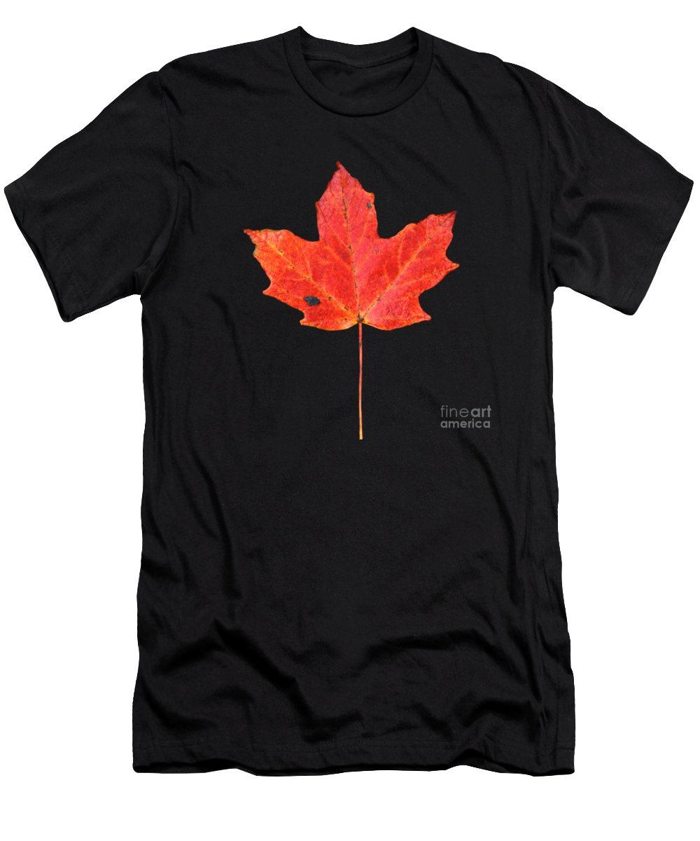 Black Shale Men's T-Shirt (Athletic Fit) featuring the photograph Red Maple Leaf On Black Shale by John Harmon