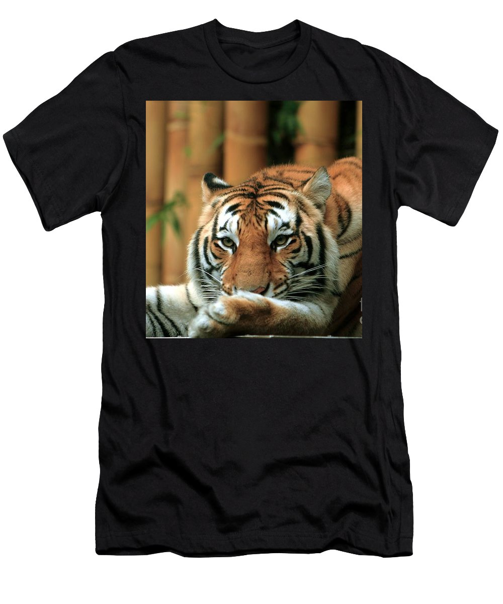 Tiger Men's T-Shirt (Athletic Fit) featuring the photograph Asian Tiger 5 by Randy Matthews