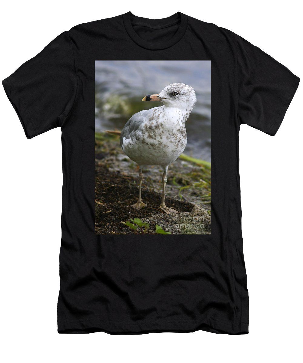 Bird Men's T-Shirt (Athletic Fit) featuring the photograph At The Beach by Deborah Benoit