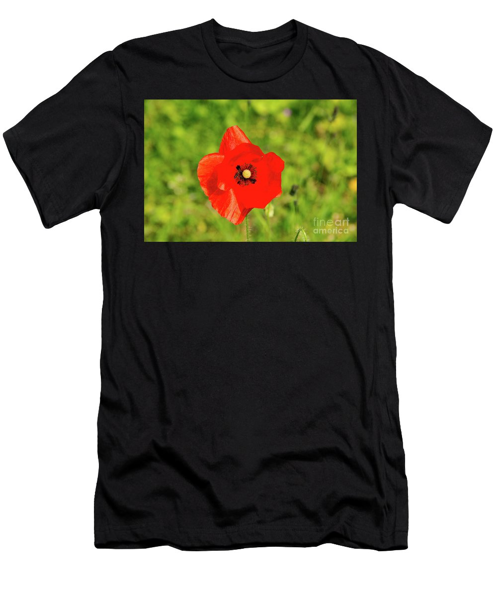 Austria. Red Poppy. Poppie.s Flower. Flowers. Plant Men's T-Shirt (Athletic Fit) featuring the photograph Austrian Poppy by Bob Phillips