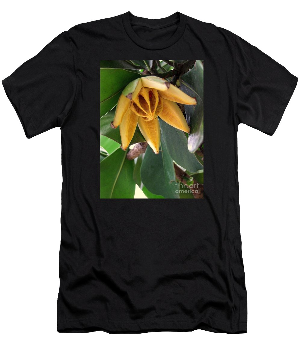 Autograph Tree Men's T-Shirt (Athletic Fit) featuring the photograph Autograph Tree Seed Pod by Mary Deal