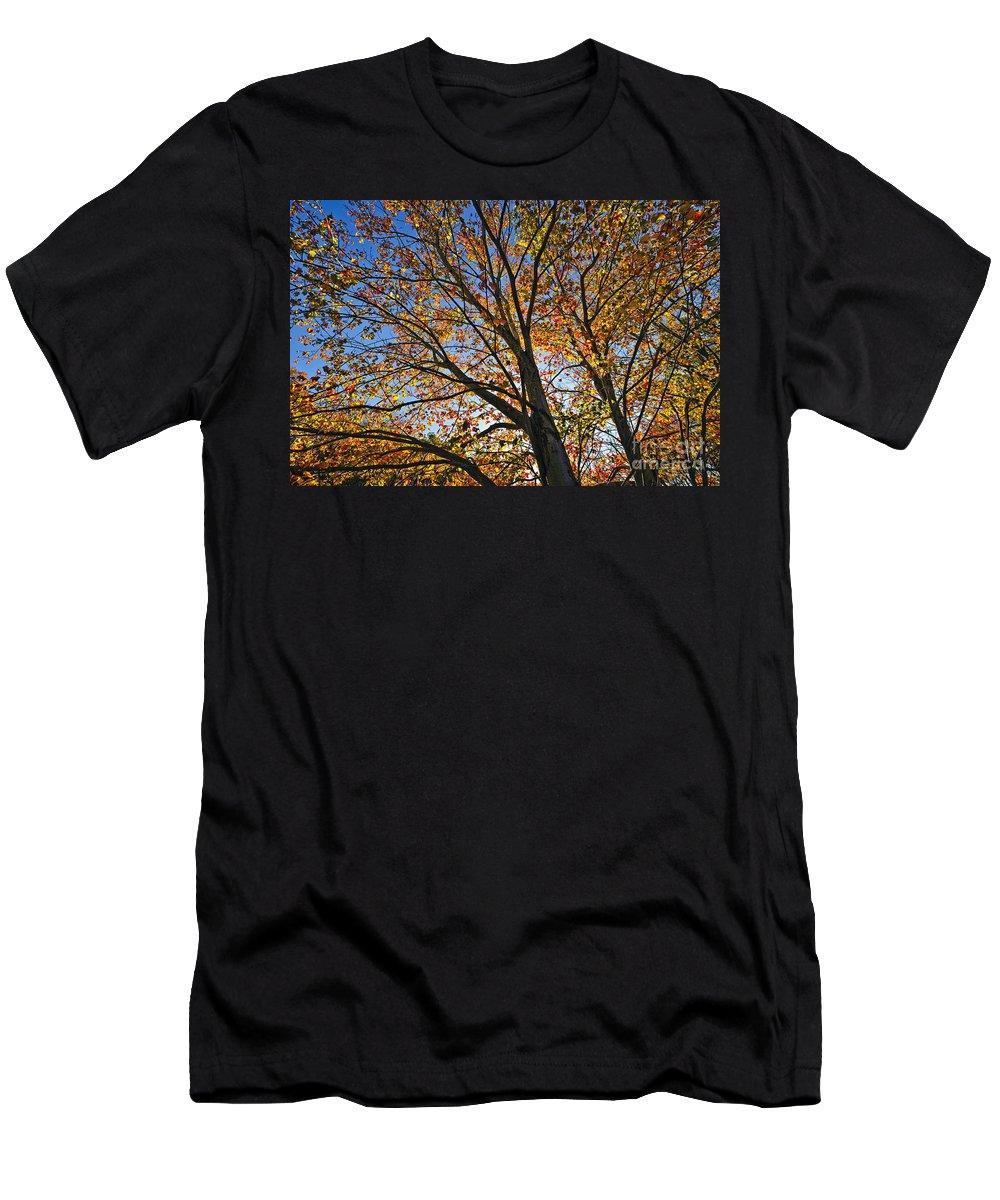 Connecticut Men's T-Shirt (Athletic Fit) featuring the photograph Autumn Foliage by John Greim