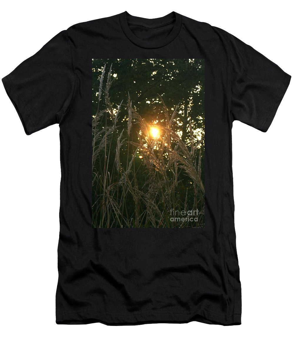 Light Men's T-Shirt (Athletic Fit) featuring the photograph Autumn Grasses In The Morning by Nadine Rippelmeyer