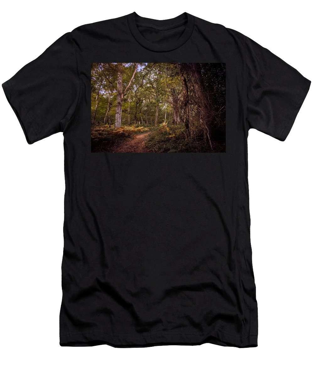 Woodland Men's T-Shirt (Athletic Fit) featuring the photograph Autumn Walk by Nick Tayman