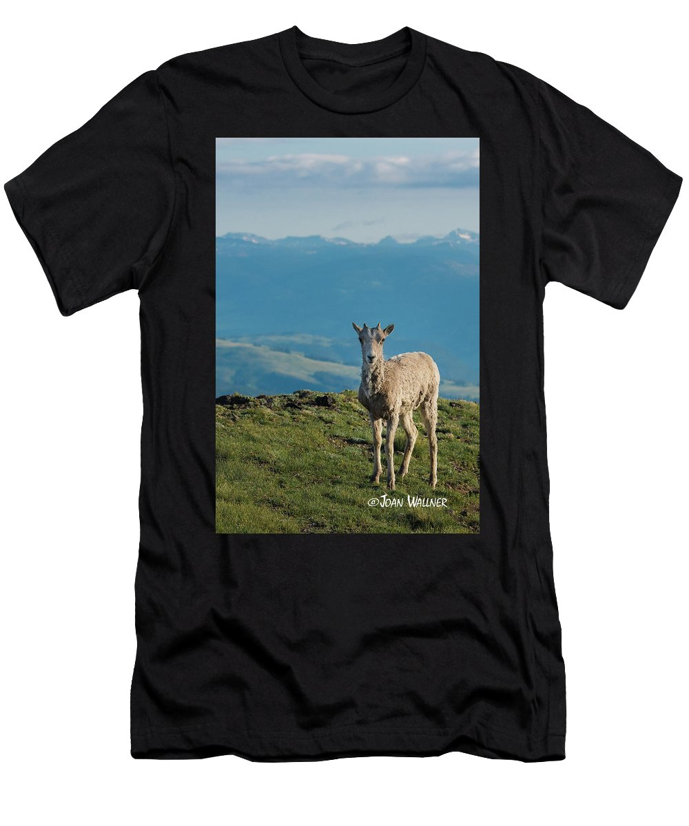 Big Horn Sheep Men's T-Shirt (Athletic Fit) featuring the photograph Baby Big Horn Sheep by Joan Wallner