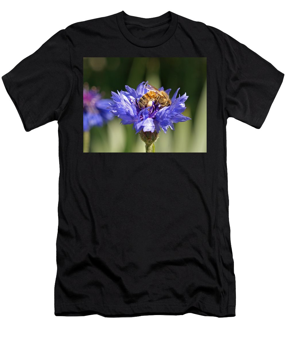 Bee. Flower Men's T-Shirt (Athletic Fit) featuring the photograph Bachelor Button And Bee by Heather Coen