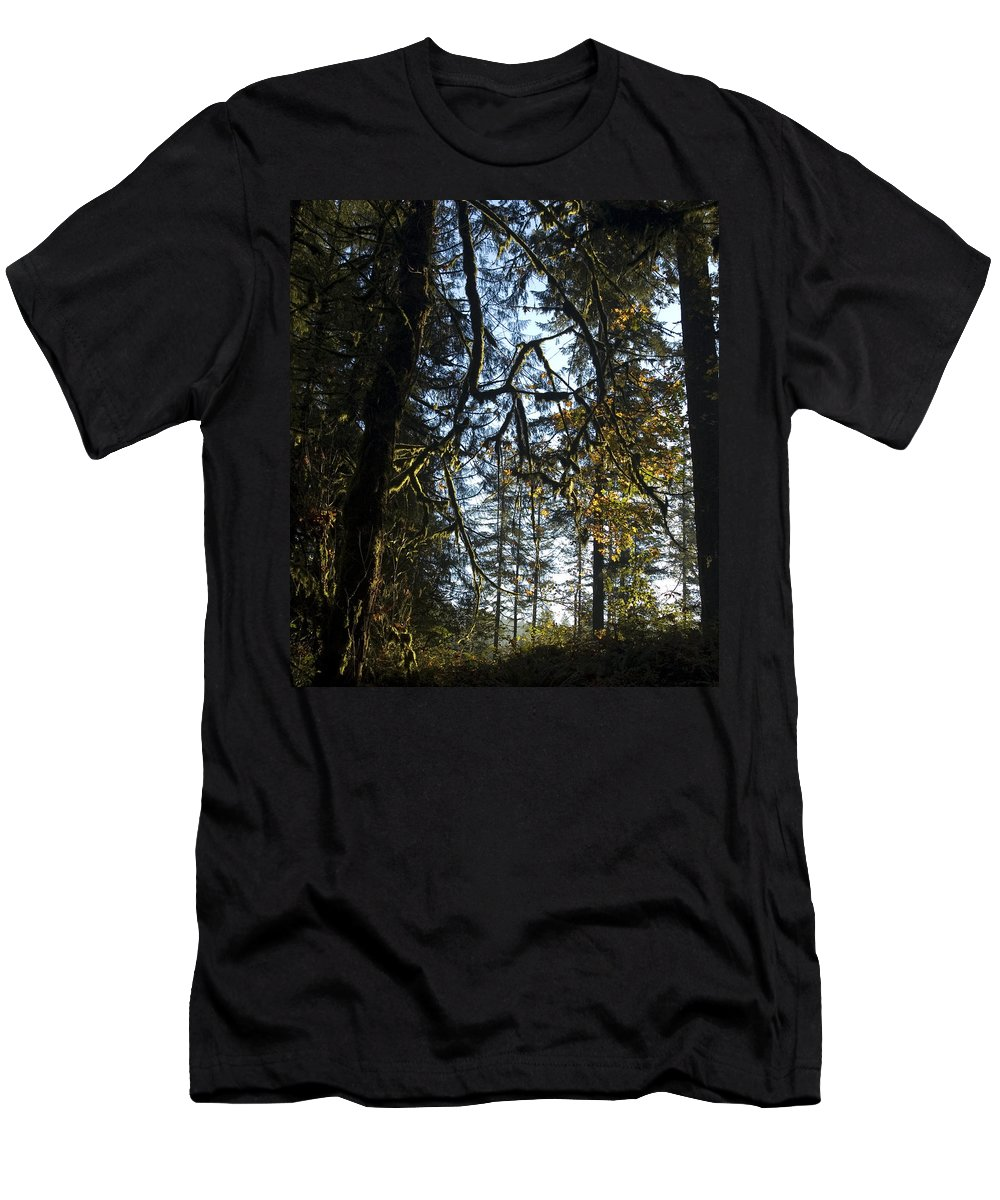 Trees Men's T-Shirt (Athletic Fit) featuring the photograph Back Lit by Sara Stevenson