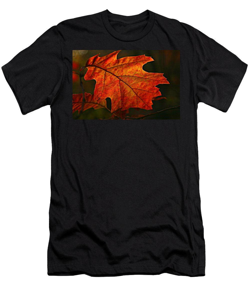 Fall Oak Leaf Leaves Orange Red Men's T-Shirt (Athletic Fit) featuring the photograph Backlit Leaf by Shari Jardina