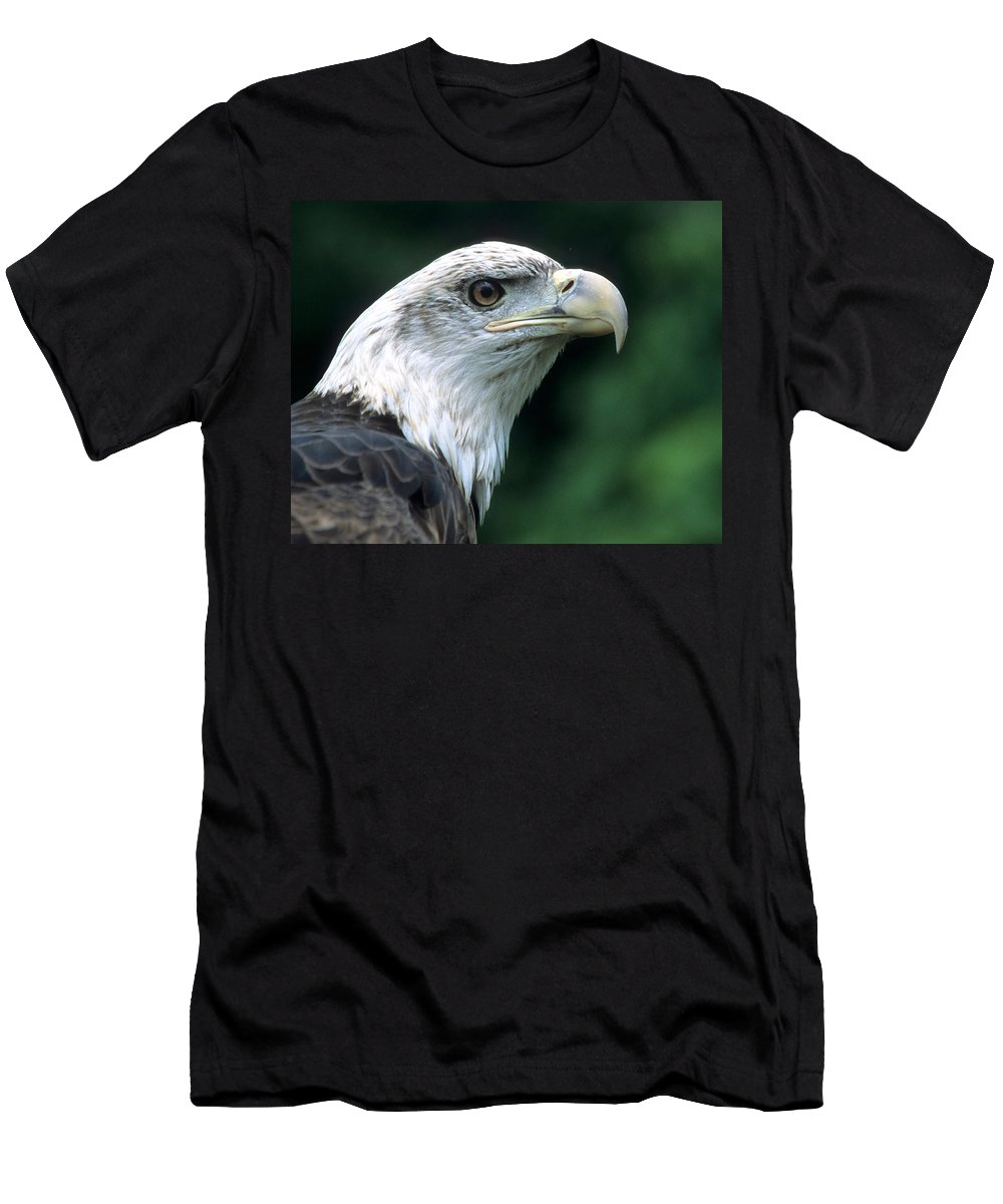 Bald Eagle Men's T-Shirt (Athletic Fit) featuring the photograph Bald Eagle On Guard by Larry Allan