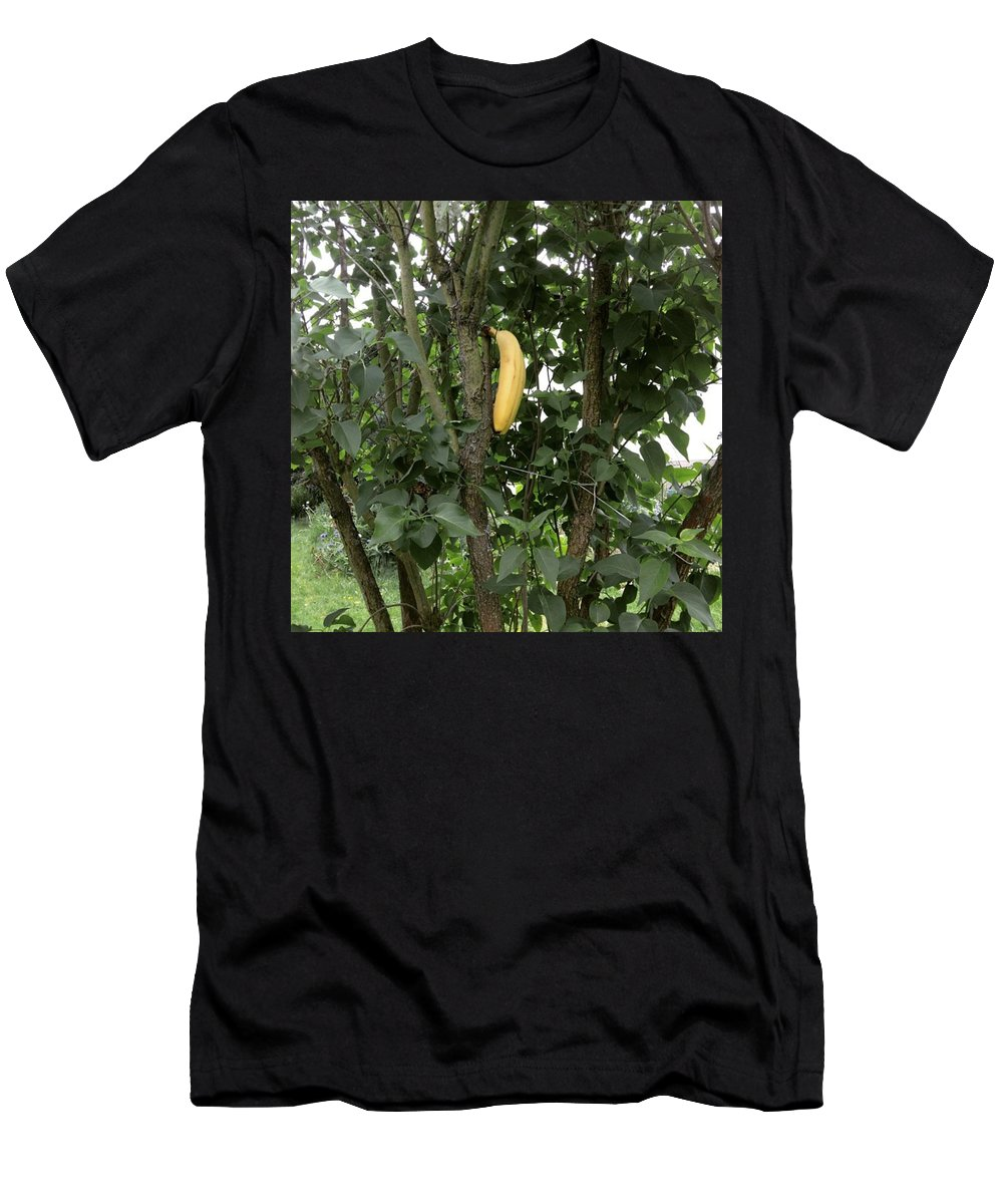 Banana Men's T-Shirt (Athletic Fit) featuring the photograph Banana Tree by Gypsy Heart