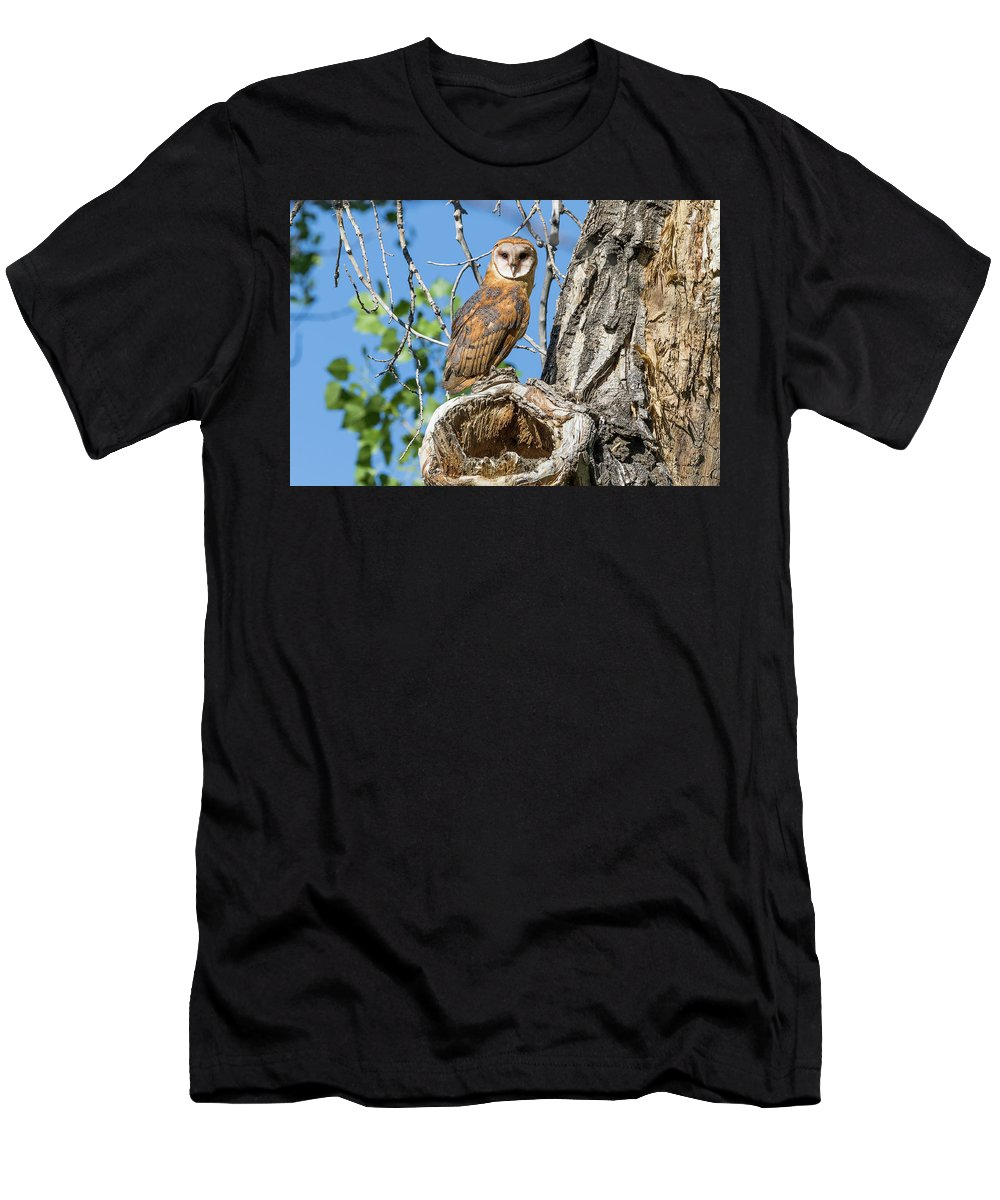 Barn Owl Men's T-Shirt (Athletic Fit) featuring the photograph Barn Owl Owlet Keeps Watch by Tony Hake