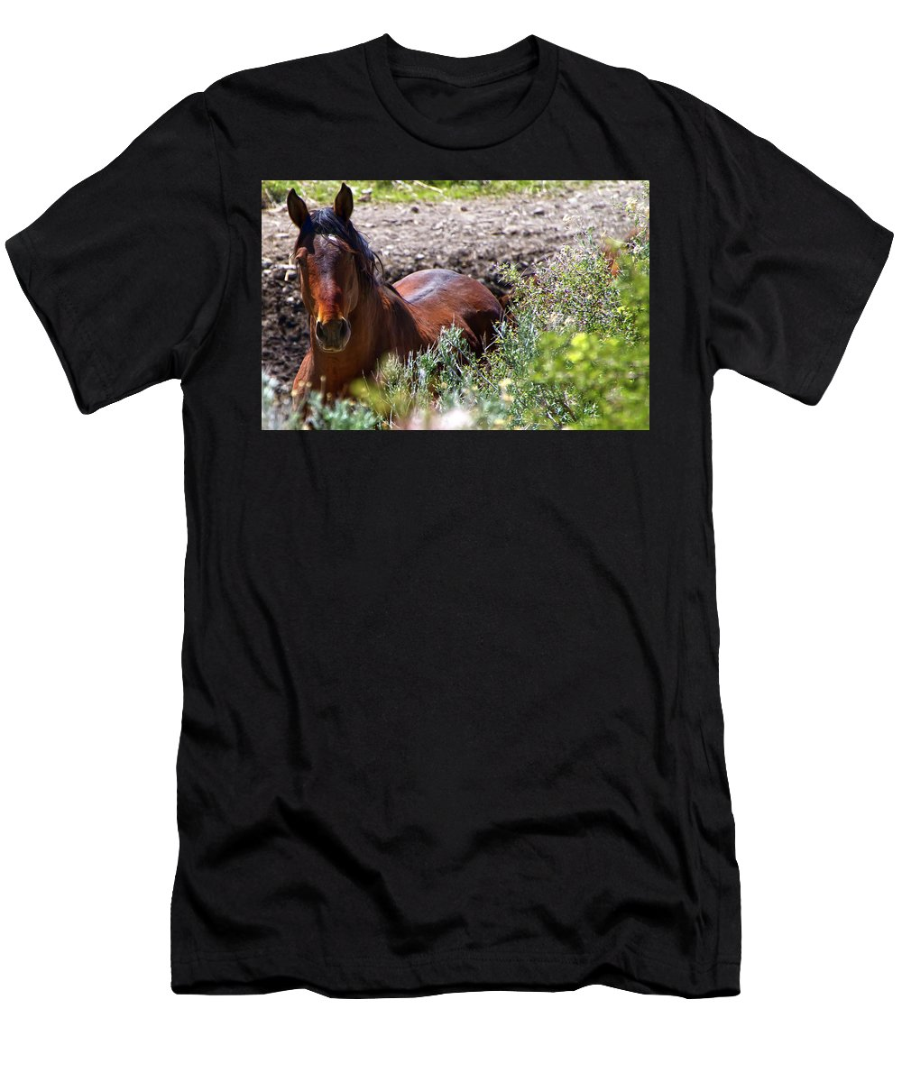 Horse Men's T-Shirt (Athletic Fit) featuring the photograph Beautiful Mustang Stallion by Waterdancer