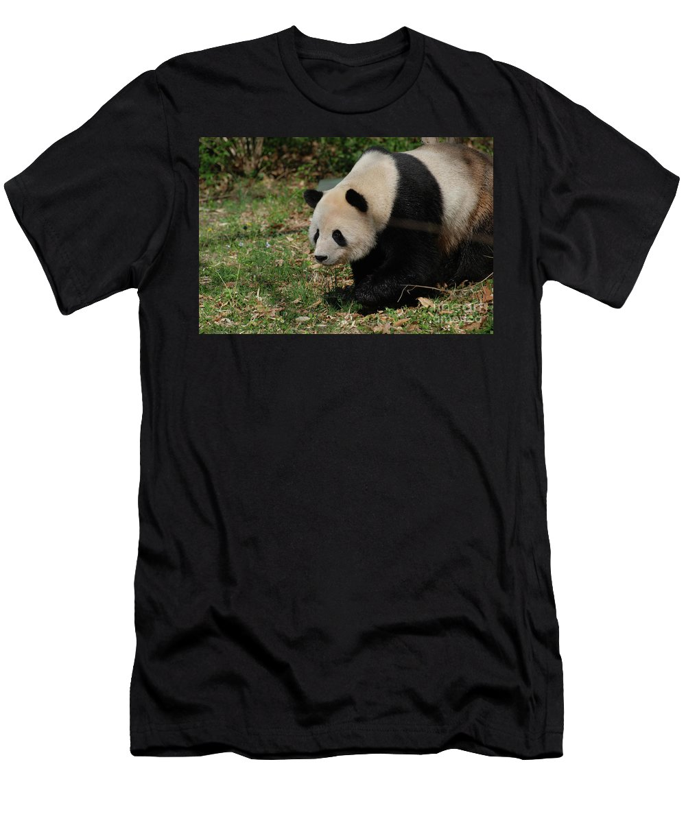 Panda Men's T-Shirt (Athletic Fit) featuring the photograph Beautiful Profile Of A Giant Panda Bear Ambling Along by DejaVu Designs