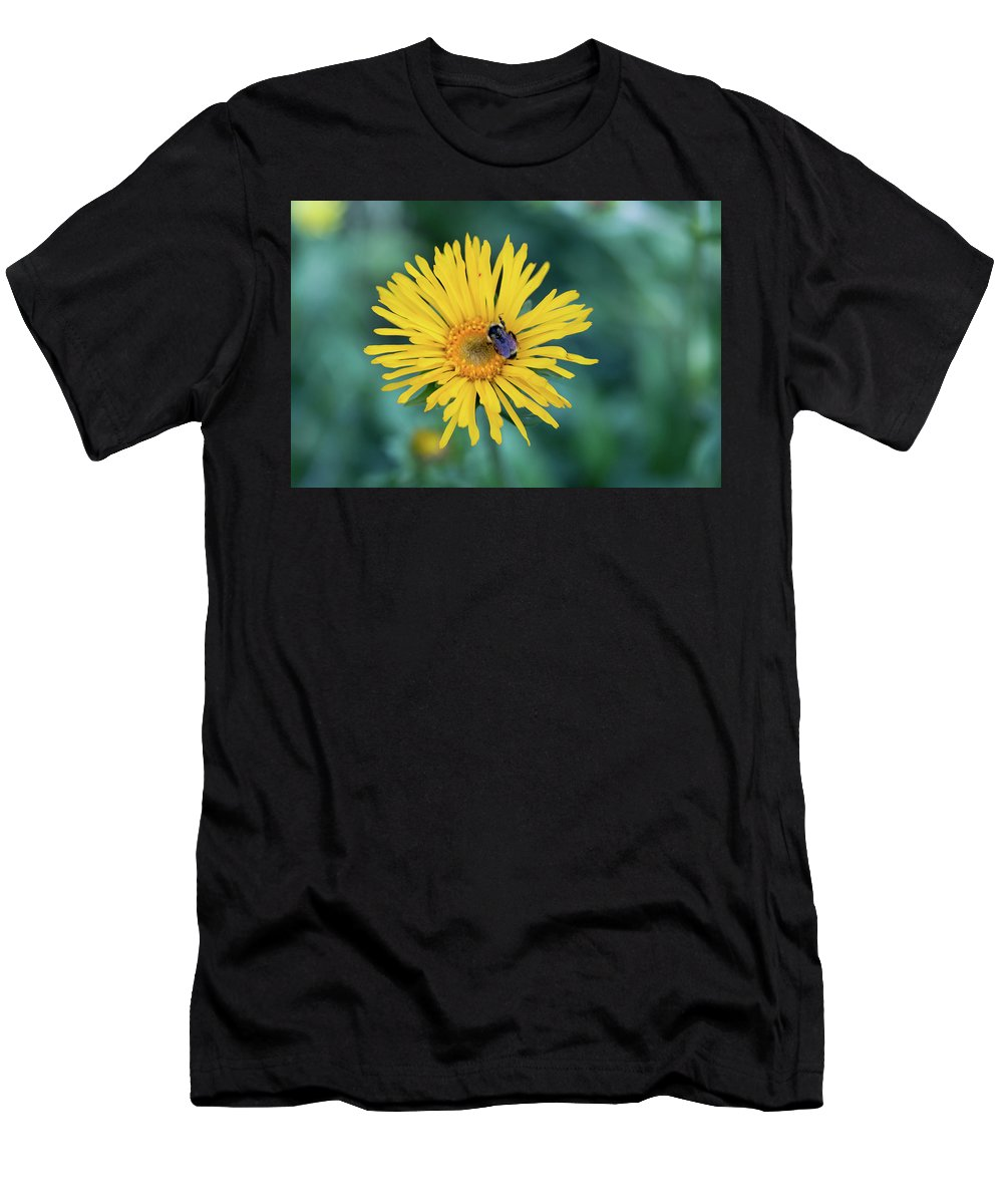 Crested Butte Men's T-Shirt (Athletic Fit) featuring the photograph Bee On Curlyhead Goldenweed by Meagan Watson