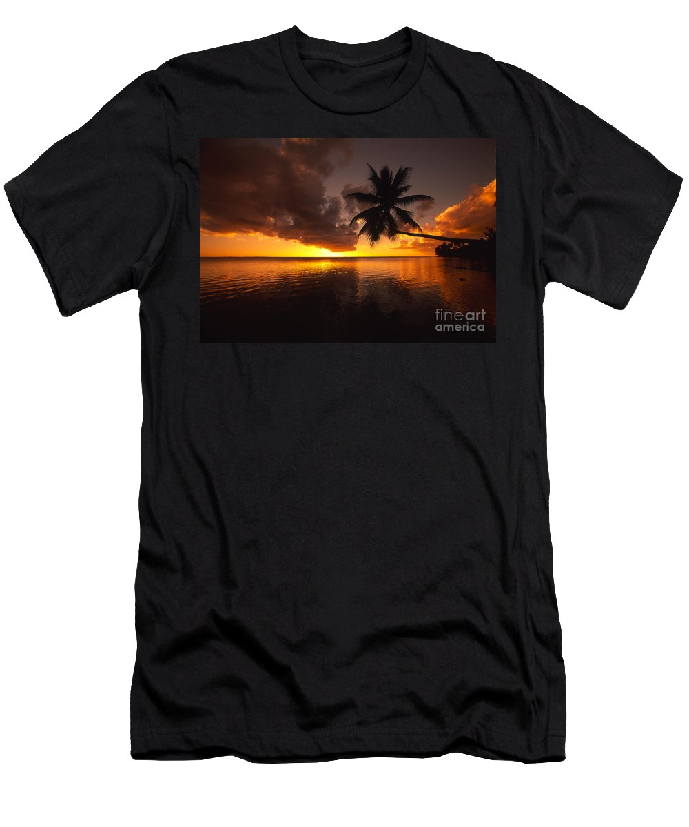 Bent Men's T-Shirt (Athletic Fit) featuring the photograph Bending Palm by Ron Dahlquist - Printscapes