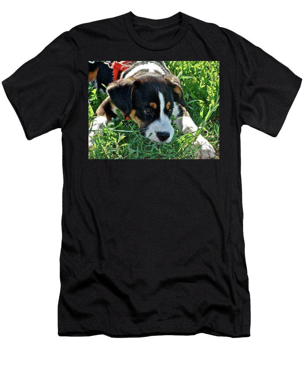 Pets Men's T-Shirt (Athletic Fit) featuring the photograph Bingo by Diana Hatcher