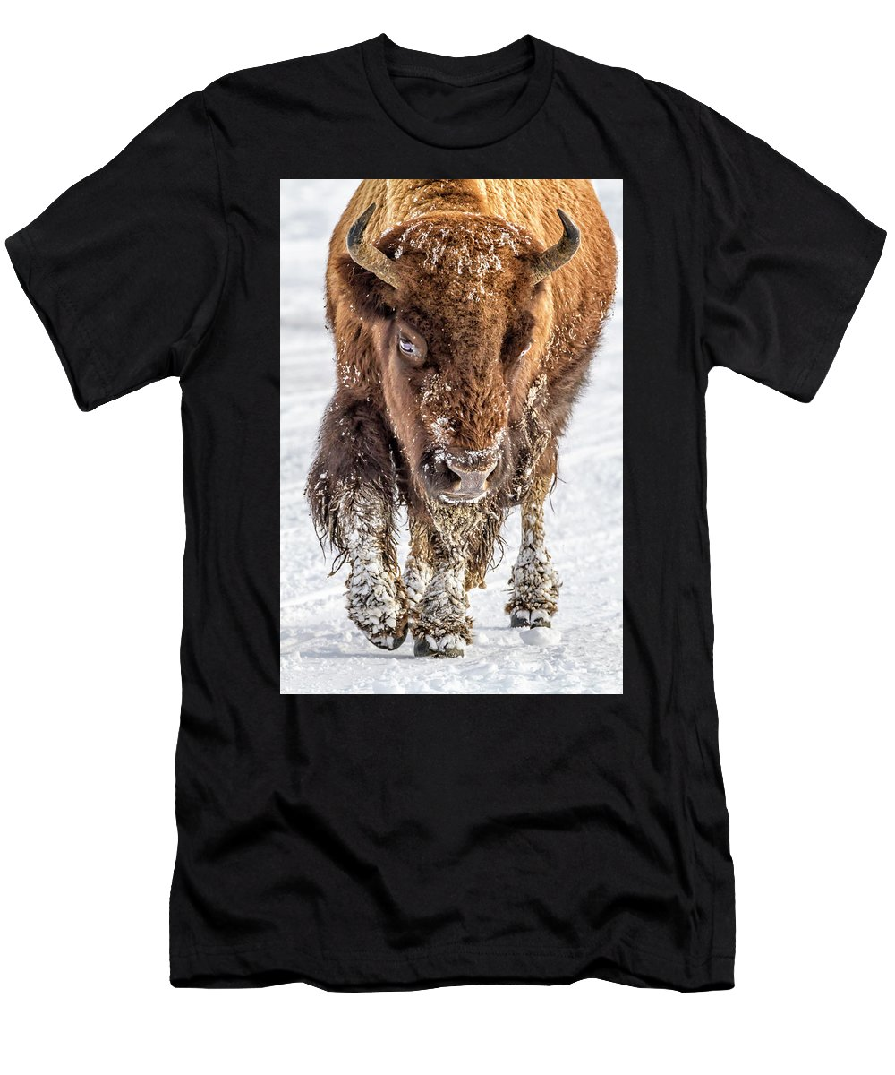 Yellowstone Men's T-Shirt (Athletic Fit) featuring the photograph Bison Approaching 8163 by Karen Celella
