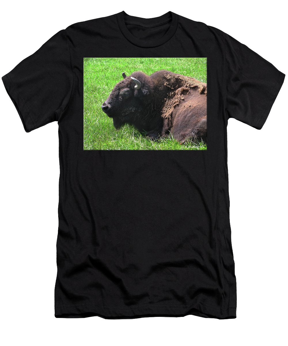 2d Men's T-Shirt (Athletic Fit) featuring the photograph Bison by Brian Wallace