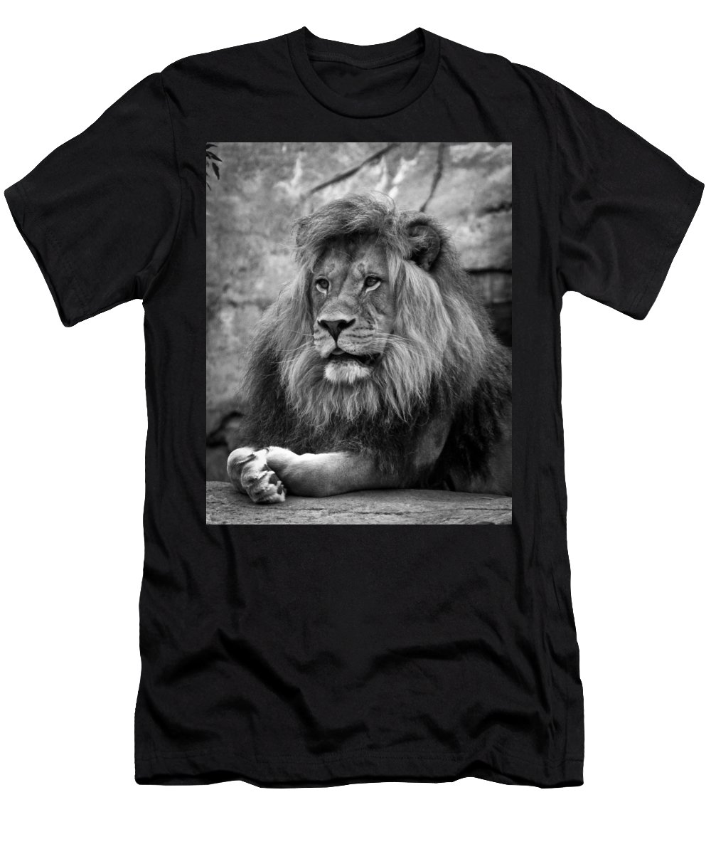 Lion Men's T-Shirt (Athletic Fit) featuring the photograph Black And White Lion Pose by Steve McKinzie